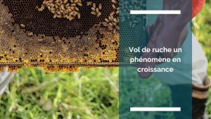 Visuel de l'article : vol de ruche un phénomène en croissance